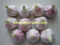 2015 fresh garlic china (new crop, best quality)