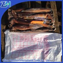 China supplier provide Illex frozen squid