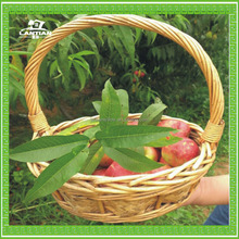 Best-selling decorative fruit basket