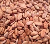 Organic Cocoa Beans (Dried)