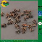 Único especiarias e ervas anis tempero usos