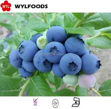 best price for frozen blueberry 2015