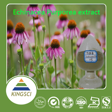 100% pure nature echinacea purpurea extract in bulk Polyphenols 4% UV
