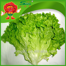 Fresh vegetable green leaf lettuce organic vegetables