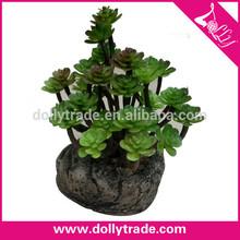 Loto de piedra planta en maceta hojas verdes para la decoración de la compañía