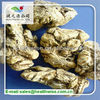 supercritical co2 extraction Angelica Root extract Dong Quai oil