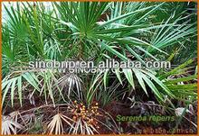 Buy Natural Saw Palmetto Fruit Extract