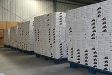 supply black garlic from China Shandong