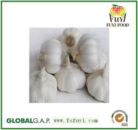 normal white pure white garlic packed in 10kgs/ctn