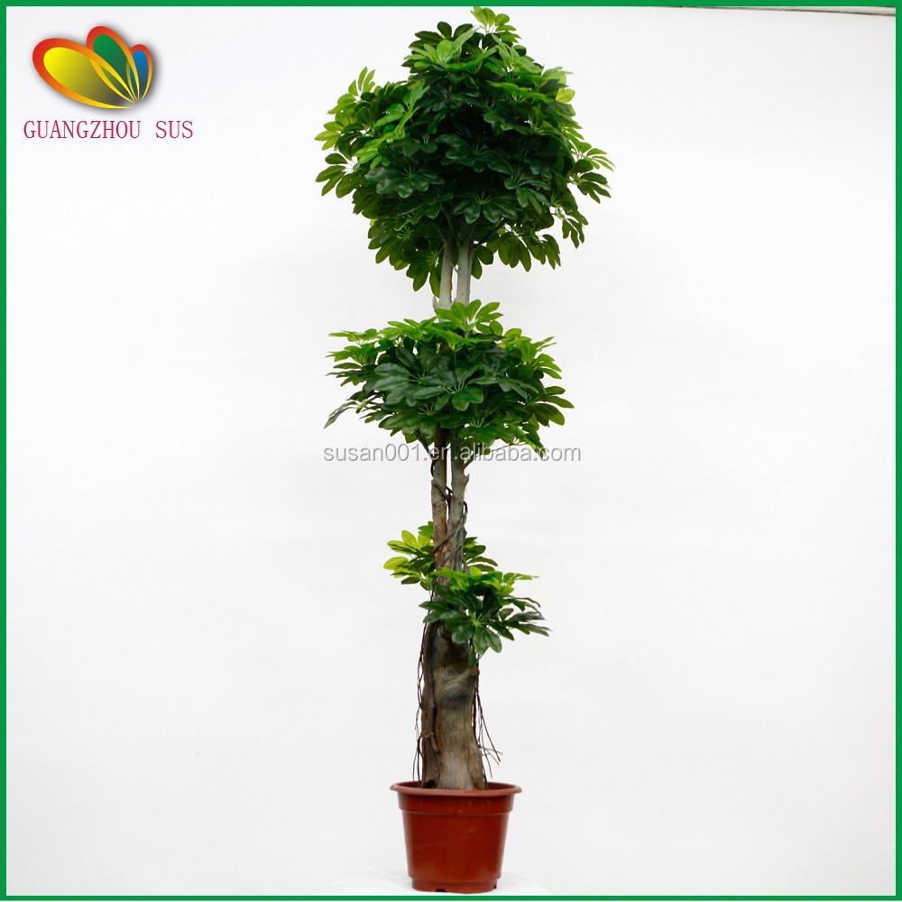 Wholesale artificial pachira money tree plant bonsai for