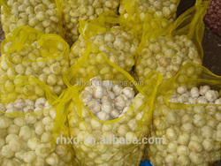 fresh garlic with good quality in China