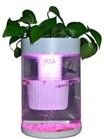With Plant green Plants Mini office table aquarium