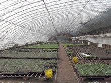 2015 New Arrival, solar greenhouse-transparent plastic for greenhouse