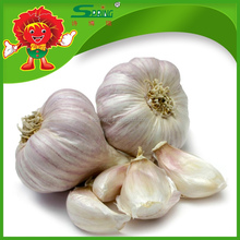 Natural White Fresh Garlic For Sale