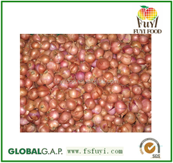 Sell Chinese Fresh Shallot onion
