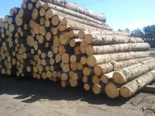 Spruce round Logs