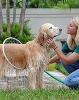 2015 new product easy use washer dog 360