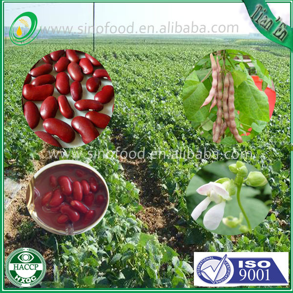 Price of canned red kidney beans in brine canned food factory 400g