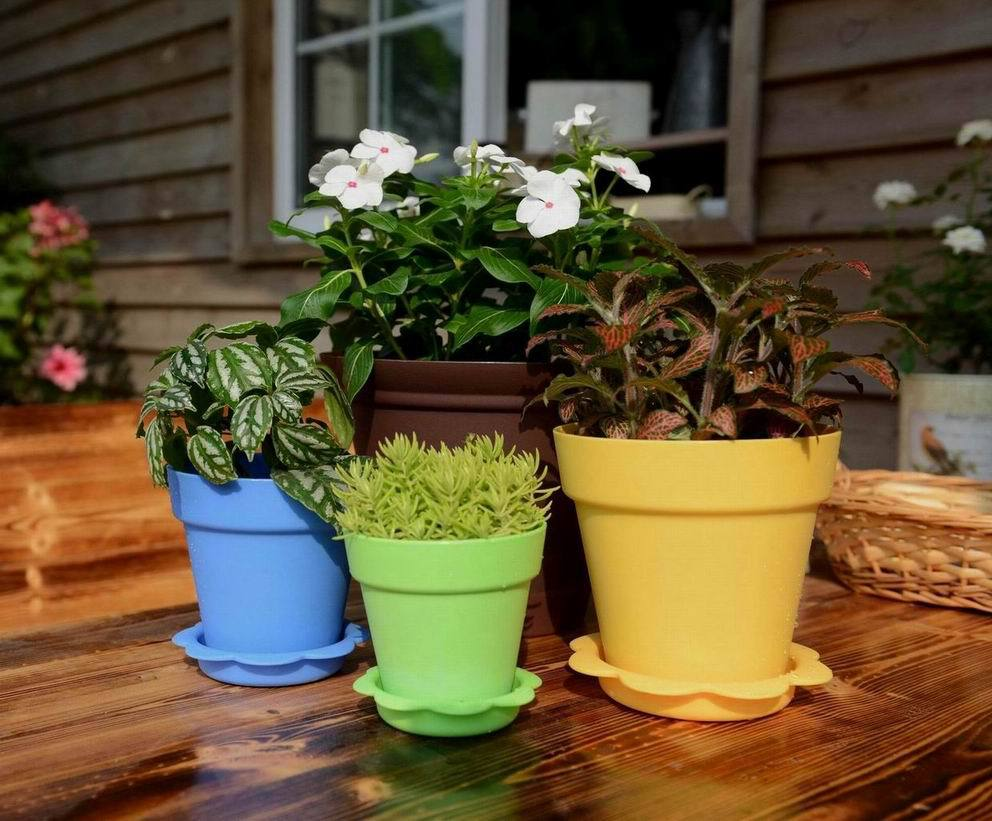 Colorful succulent plants plastic flower pot seeding pot gardener indoor vegetable garden buy - Colorful indoor plants ...