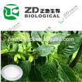 nombre científico eucommia ulmoides oliver extracto en polvo