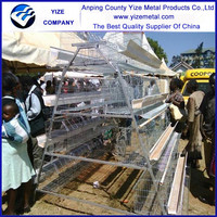 China exporting best selling best quality bird/chicken cage