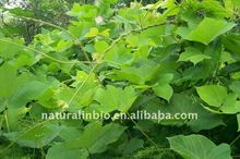 Extracto de raíz de Kudzu 40% isoflavonas