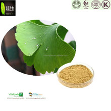Light yellow Powder Natural water soluble Ginkgo Biloba Extract