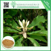 Low Price China Supplier Natural black cohosh Extract 10:1
