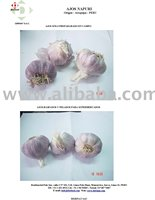 Garlics Purple
