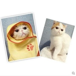 New Products top-selling pet dog towel microfiber cat washing/cleaning towel/cloth