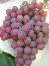 Table grapes for sale