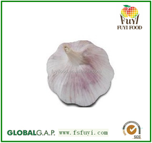 5.5cm,6.0cm fresh garlic for garlic buyer