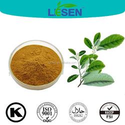 Wild Yerba Mate Extract Ilex paraguariensis yerba mate herb extract