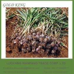 Wholesale White Garlic Price Chinese Natural Fresh Garlic