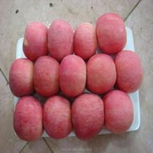 Supply Chinese China Fresh red tasty fuji apple 100#,113#,125#