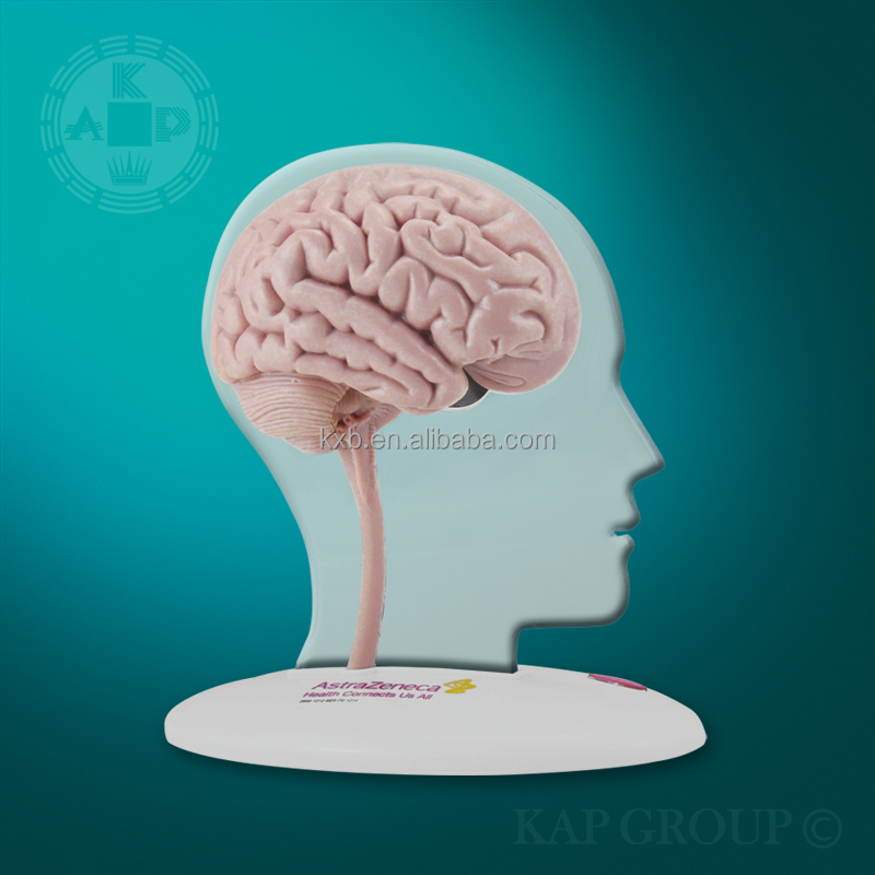 High-quality Silicone Medical Fake Human Brain Model /artificial 3d ...