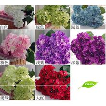 gnw flh702 nomi di fiori negozi specializzati in fiore vendita piante
