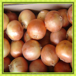 fresh 3-7cm 5-7cm 7-9cm red and yellow onion exporter supplier