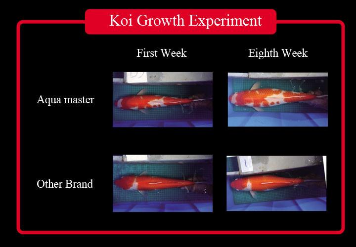 growth-experiment-E