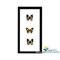 FOUSEN(023 Random Species ) 18*35*3cm Vertical Framed 3 Butterflies Wall Decorations