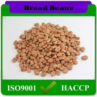 Dried Style and Bulk Packaging Dry Broad Beans Fava Beans Sale,Chinese Organic Cultivation Type Broad Beans Exports
