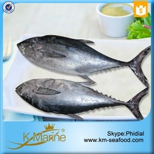 Fair Price Fresh Tuna Stock Albacore