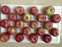 20kg carton red star apple