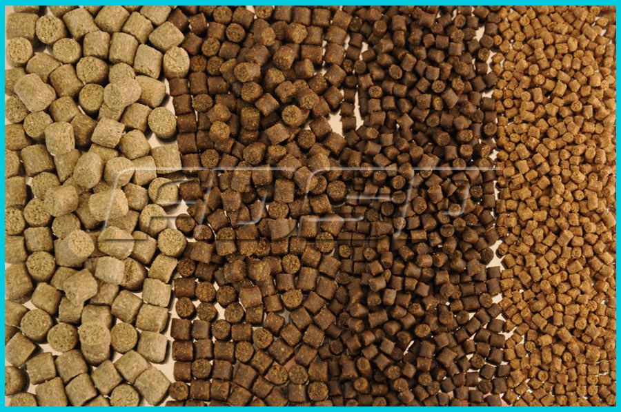 livestock feed marketing in bangladesh problems