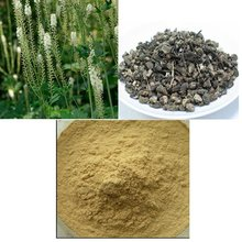 Natural Plant Extract / Black Cohosh Extract
