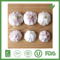 fresh chinese garlic for sale