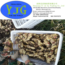 2015 100% Nature Young fresh Ginger with best price carton and mesh bag