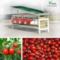 Tomate cherry de clasificación de la máquina ysxt- 1c