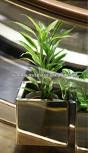 Lucky Bamboo Decorative Plants