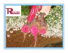 Radish Red Extract,Radish Red Color E60,Radish Red Color powder